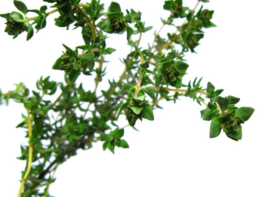 romatizmaya bitkisel çözüm