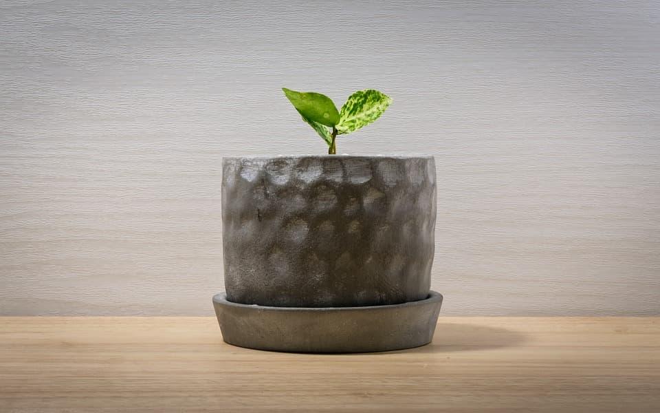 teraryum bitkileri nelerdir